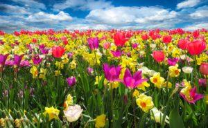 pixabay_Gellinger_spring-awakening-1197602_1920